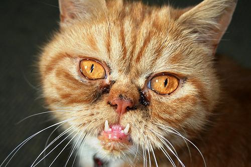El Baño Mas Feo Del Mundo:Ugly Cat Face