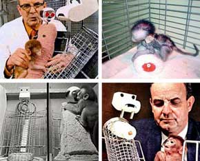 Los Experimentos Psicológicos más controvertidos de la historia